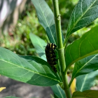 Early Bird Misses the Caterpillar